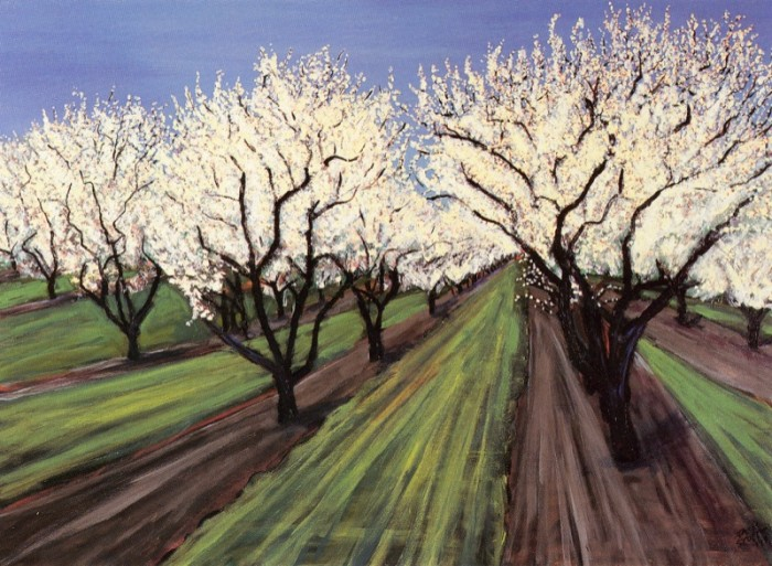 Almond Trees, University Farm