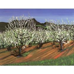 Graton Apples